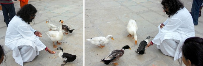 Mohanji feeding the ducks