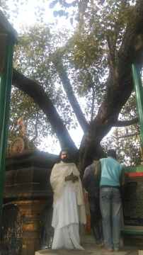 11-Sarnath-The Bodhi tree.jpg