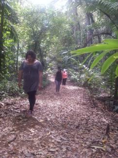 Conscious Walking - Rainforest, Australia