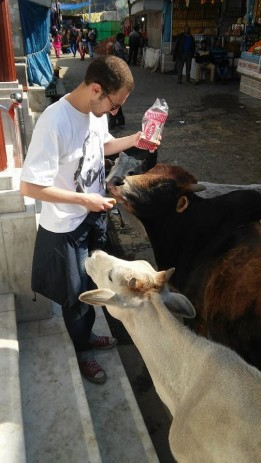 9 Feeding the cows