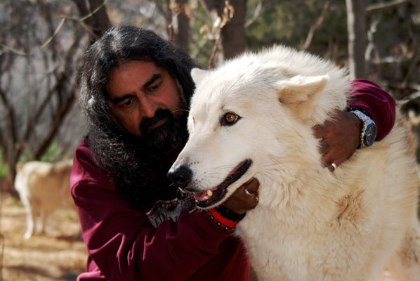 Mohanji and the white healing wolf FB