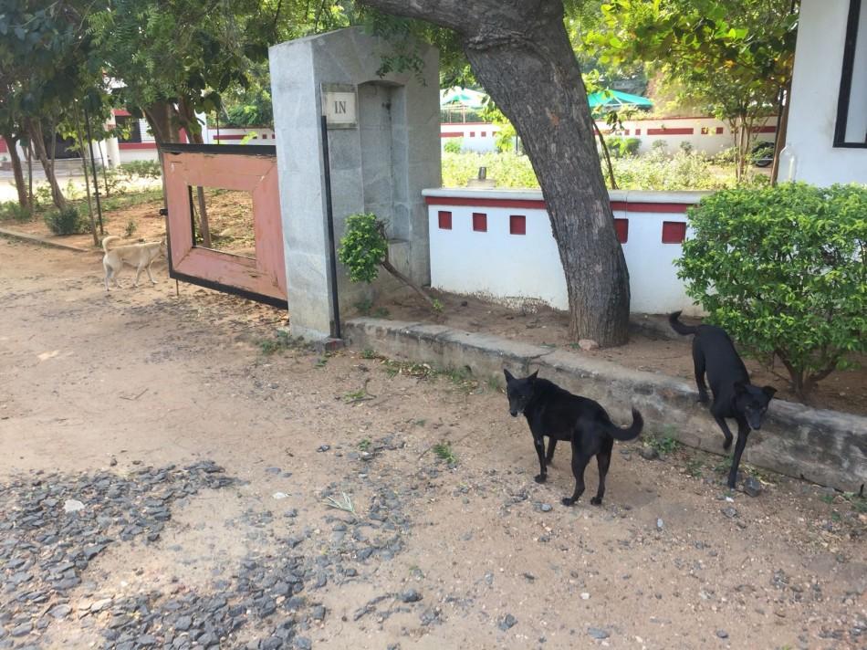 3_dog_waiting_for_Mohanji.jpg