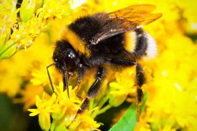Bumblebee - 24 Gurus of Lord Dattatreya