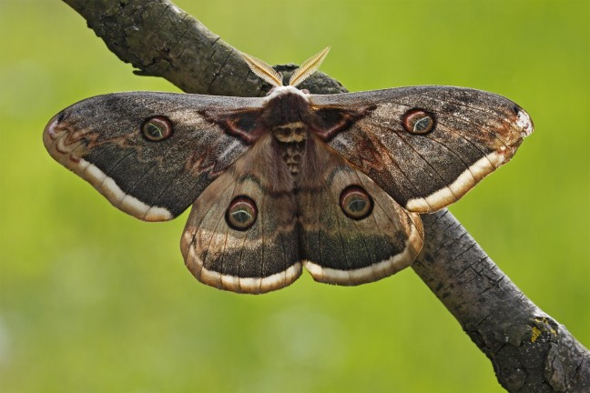 Moth 2 - 24 Gurus of Lord Dattatreya - Poem by Biljana Vozarevic