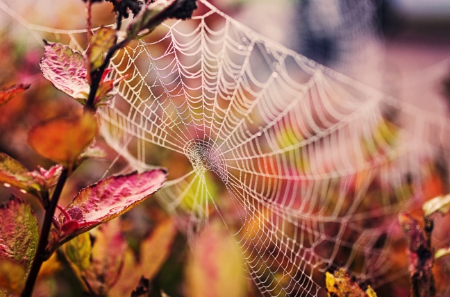 Spider 2 - 24 Gurus of Lord Dattatreya - Poem by Biljana Vozarevic