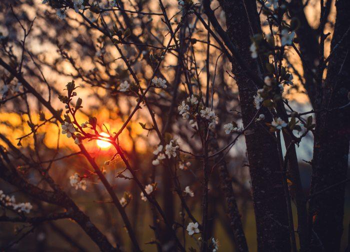 blossom-branch-color-774813