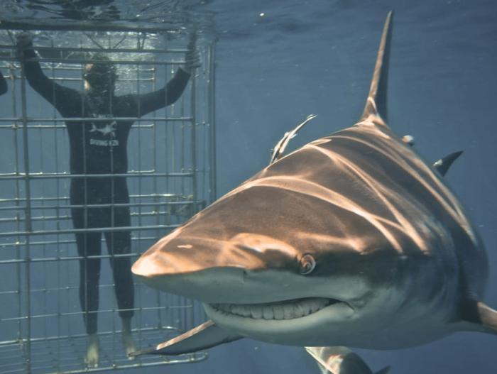 Mohanji Chronicles Blog - Timeless Leelas - Shark cage diving in Durban