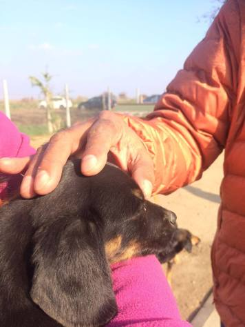 Mohanji Satcharita_Shaktipat to puppy