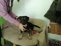 puppy_zen_2