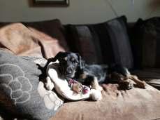 puppy_zen_3