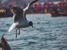 Bird at Kumbh 2019
