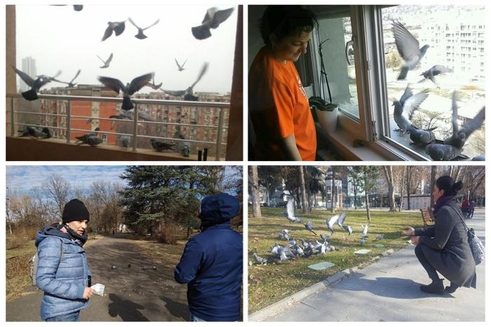Feeding birds - Mohanji- birthday celebration - Macedonia