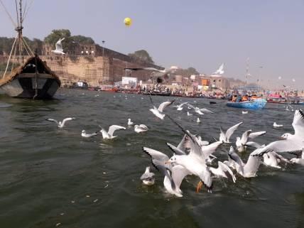 Birds Kumbh Mela 2019