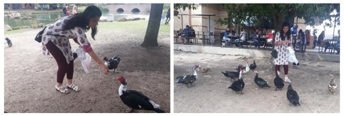 USA - Happy birthday Mohanji - feeding birds in Texas