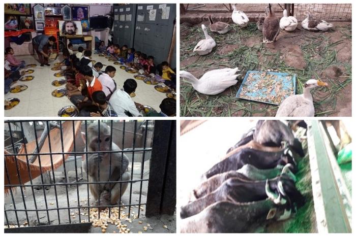 USA - Happy birthday Mohanji - Los Angeles, New York, New Jersey 2 - feeding birds and food distribution