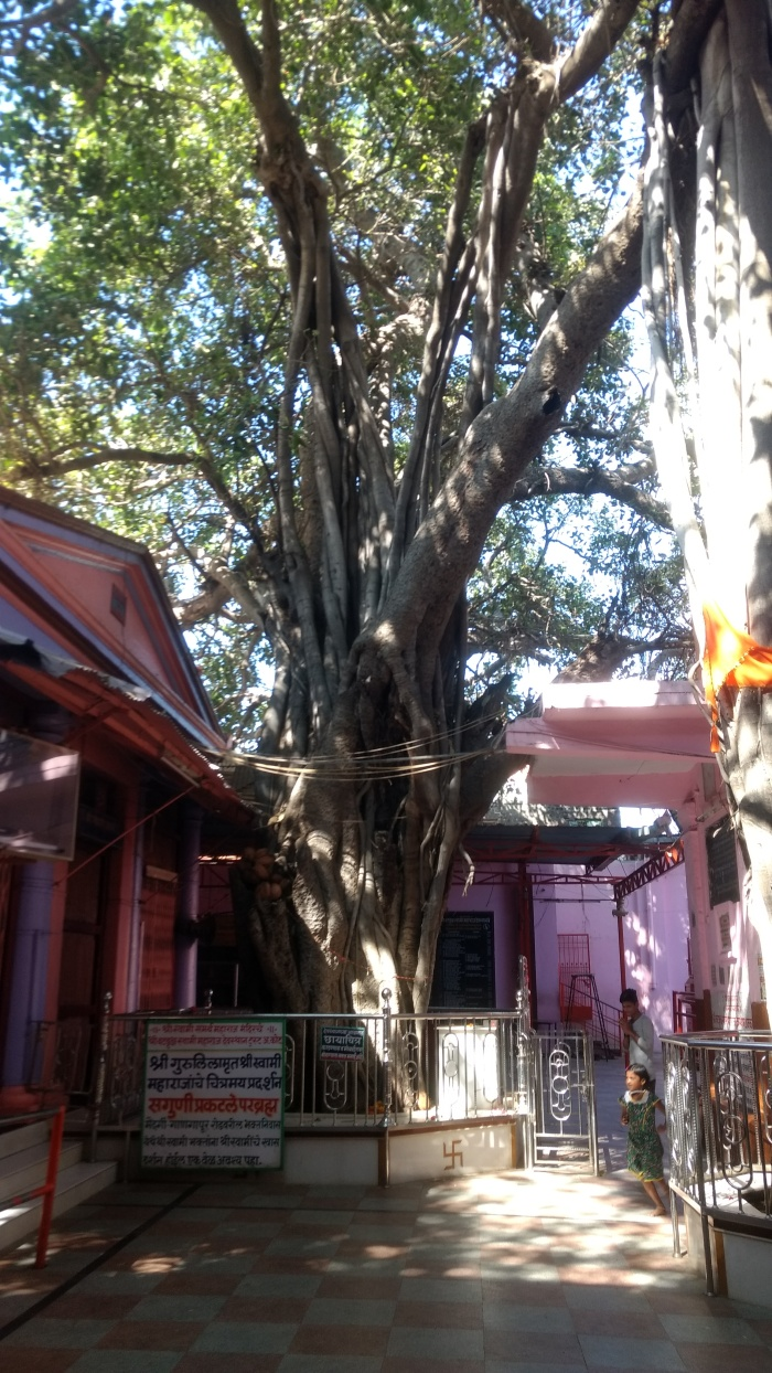Mohanji Chronicles - Back from the dead – A tryst with Swami Samarth of Akkalkot - Mohanji visits banyan tree.jpg