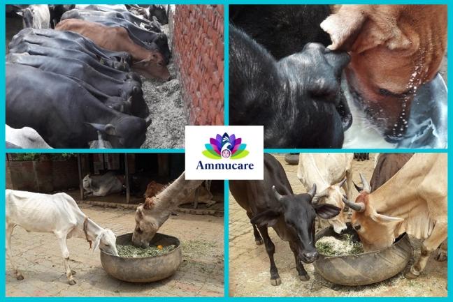 Ammucare - Delhi animal centre - Guru Purnima 2019
