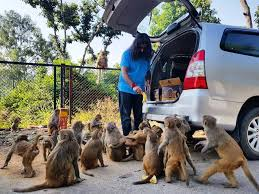 Mohanji with monkeys