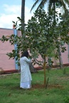 mohanjichronicles-Gopal Krishna Baba - Mohanji Visiting Audumbar Tree-2