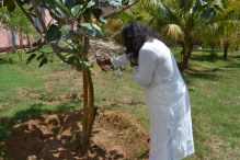mohanjichronicles-Gopal Krishna Baba - Mohanji Watering Audumbar Tree-2