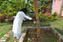 mohanjichronicles-Gopal Krishna Baba - Mohanji Watering Audumbar Tree