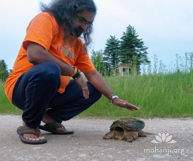 Mohanji Turtle